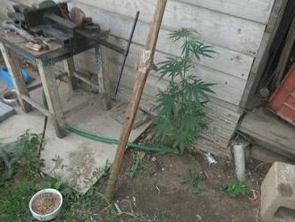 Razia v bratislavskej Devínskej Novej Vsi. Polícia prehľadávala farmu, na ktorej hľadala drogy