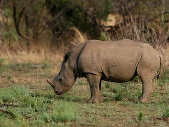 V nizozemské zoo se utopila samice nosorožce, utíkala před samcem