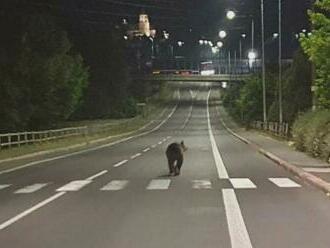 Útokov medveďov na strednom Slovensku pribúda: Muž opísal, ako sa ubránil medvedici